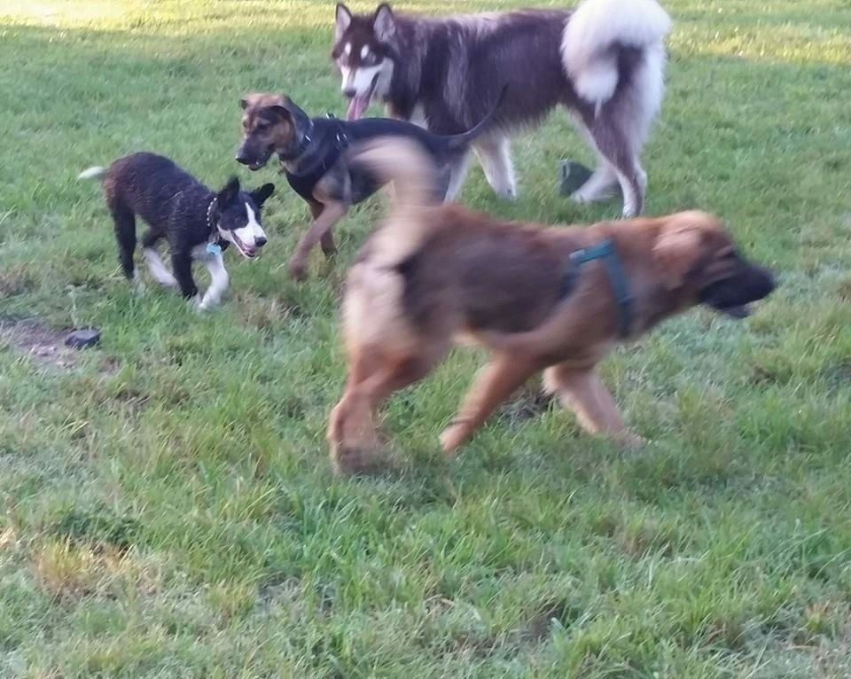 Hollywood makes progress on Hollywoof Dog Park