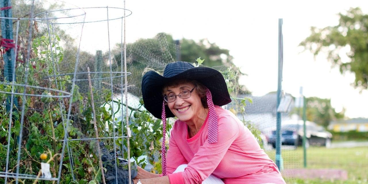 Highland Gardens Community Garden initiative still growing strong in Hollywood