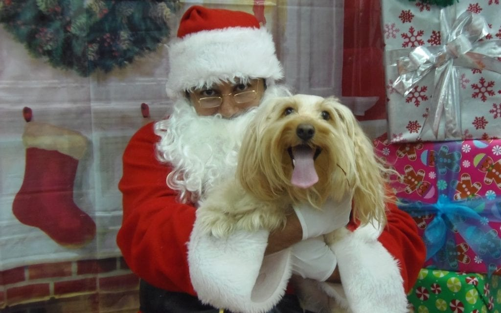 Free pet photos with Santa offered at VCA Hollywood Animal Hospital on Dec. 17