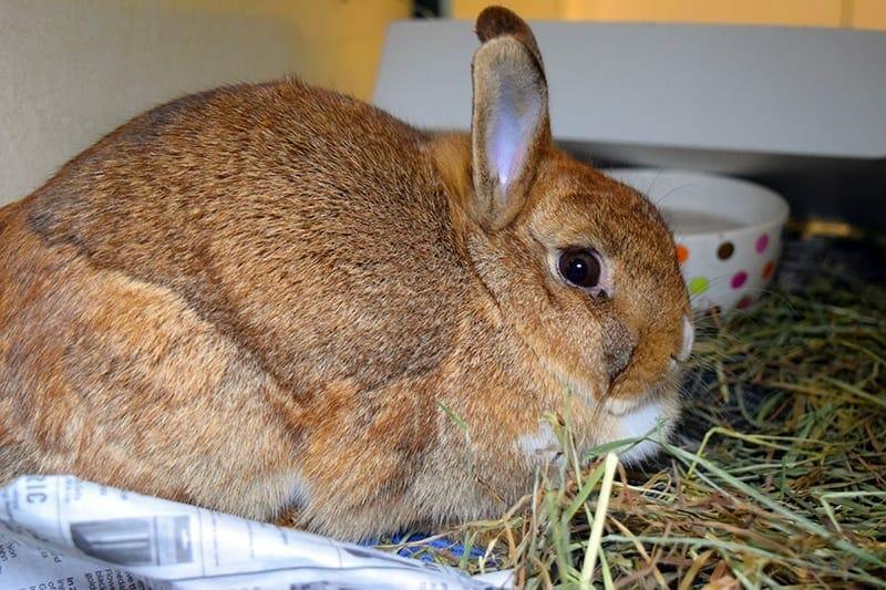 Free bunny basics class set for Sat., April 8 at Humane Society