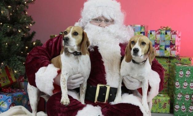 Free Pet Photos with Santa at VCA Hollywood Animal Hospital Dec. 16