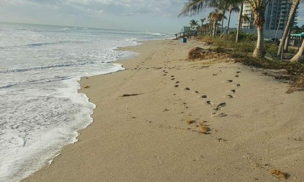 Who Put the Beach in Dania Beach?