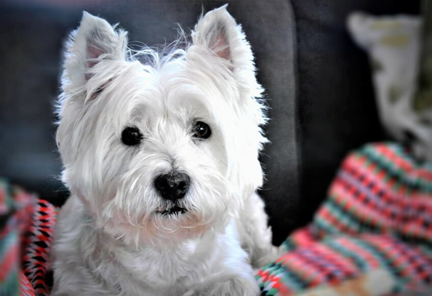 Hollywood is offering Virtual Pet Photo Pageant